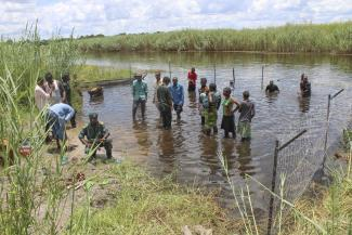 A crocodile proof fence in Zambia helps to protect people and livestock